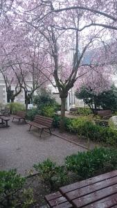 Tours'da Bahar Çiçekleri
